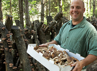 sloco_muschrooms_fresh_from_farm_nashville_tennessee2